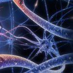 Neurobiología del ser humano
