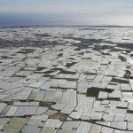 El origen de los invernaderos de Almería